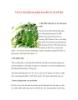 Vai trò cần thiết của phân bón đối với cây hồ tiêu